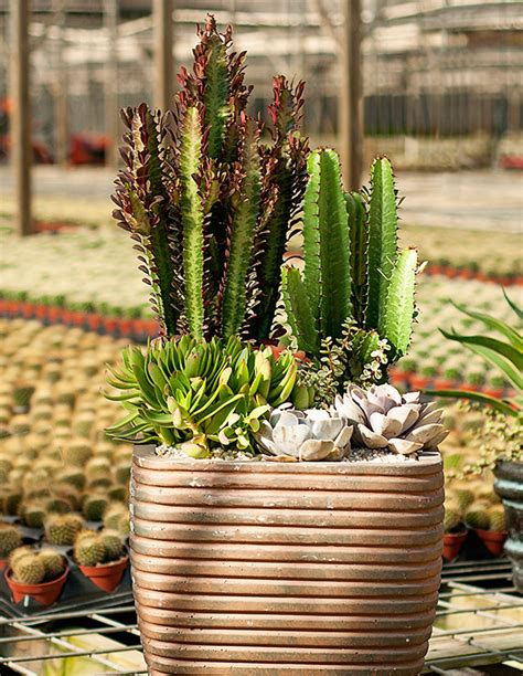 Make Beautiful, Easycare Container Gardens With Desert