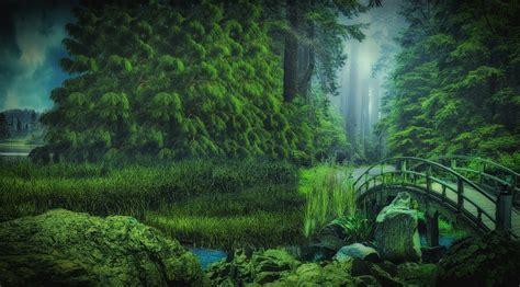 forest nature bridge  image  pixabay