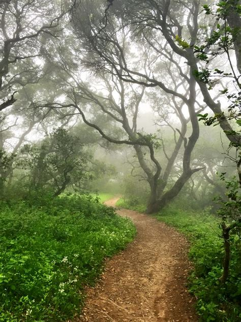 faerie forests
