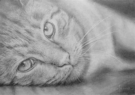 Online Art Class  How To Draw Cats Part 2  Paint Basket Tv