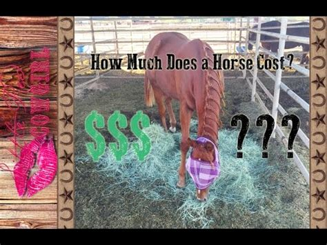 How Much Does It Cost To Own A Horse? Youtube