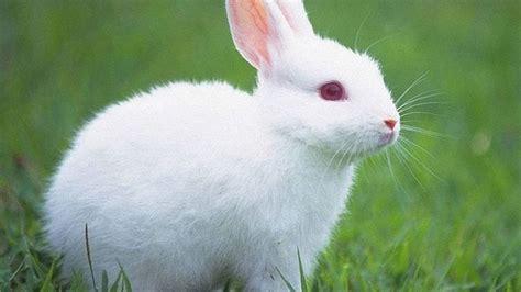 Top 10 Beautiful Animal Wallpapers - most beautiful animals in the world top 10 www pixshark