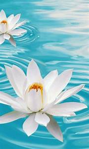 Pinterest White Water Lily Quotes