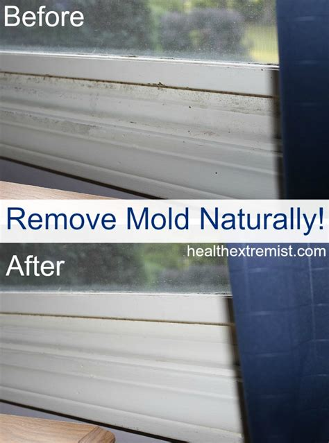 paint that kills mold how to get rid of mold naturally 3 ways
