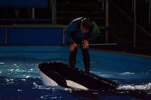 Seaworld San Diego Light Show Light Up The Night At Seaworld Marine Mammal Trainer
