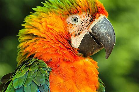ideas for small bathroom macaws as pets species profile