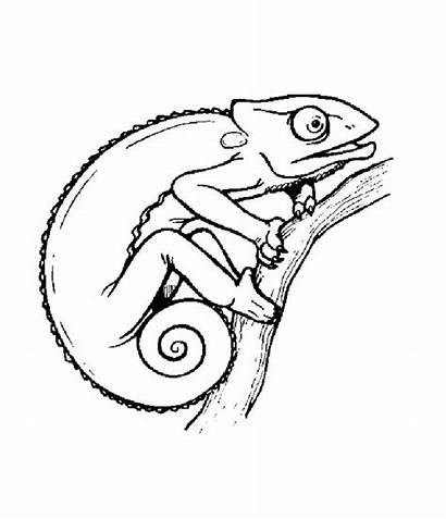 Chameleon Getdrawings Drawing