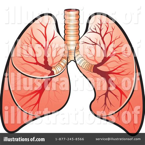 Lungs Clipart Lung Clipart Clipart Panda Free Clipart Images