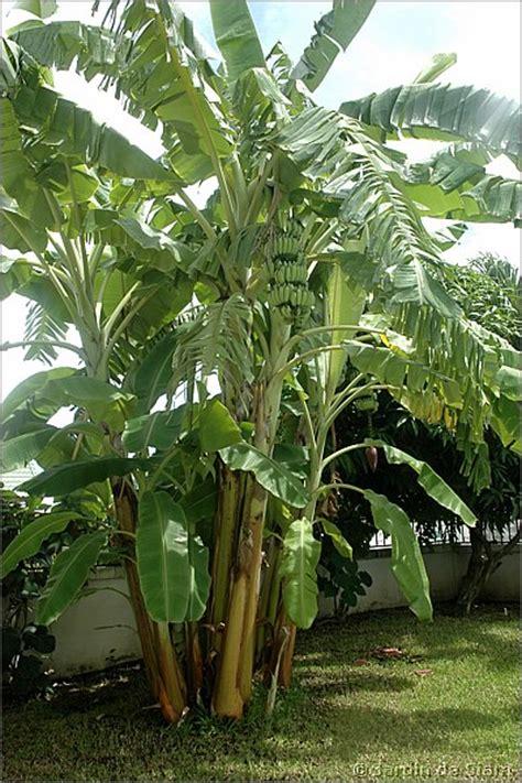 la maison du bananier maison design goflah