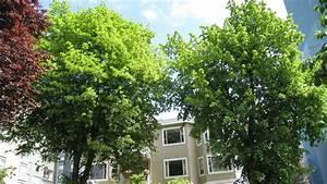 Arbre Croissance Rapide : arbres a croissance rapide ~ Premium-room.com Idées de Décoration