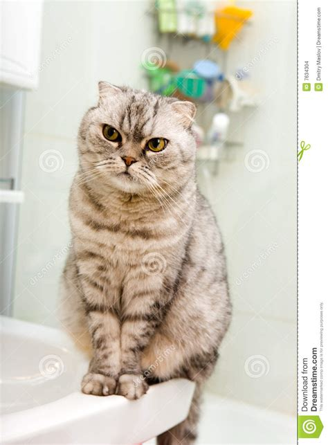 grey cat in a bathroom stock images image 7634304