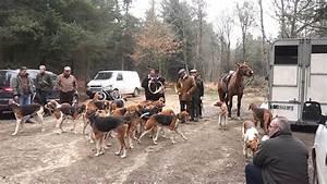 Rallye De Bretagne : d part de chasse courre dans les bois de bretagne youtube ~ Maxctalentgroup.com Avis de Voitures