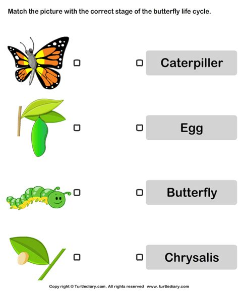 butterfly cycle pictures worksheet turtle diary