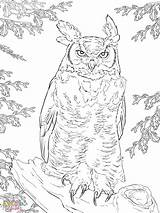 Owl Horned Coloring Pages Realistic Printable Getcolorings Print Col Authentic sketch template