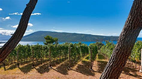 Fjord Vineyards by Montenegro Should Be Your Summer Holiday Destination