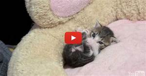 Very Cute Kitten Wallpaper - WallpaperSafari