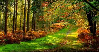 4k Forest Ultra Colorful Road Wallpapers Path