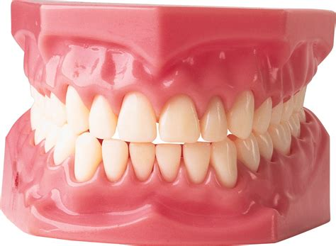 Teeth Png Images Tooth Png Image