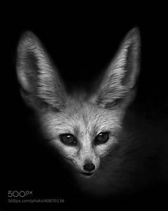 The Fennec Fox by John Dickens / 500px