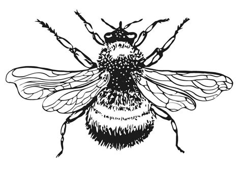 coloring page bumble bee img