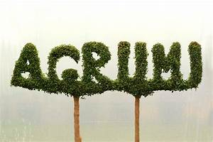 letters archives bespoke topiary plant sculptures With topiary letters