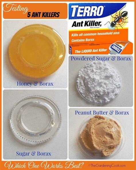 best ant bait best ant killer bing images
