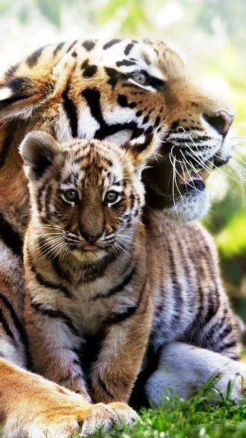 Best Images About Greatest Love Mom Pinterest