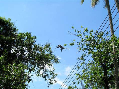 Essay Trip To Sarawak by Proboscis Monkey Photo Essay In Bako National Park Borneo