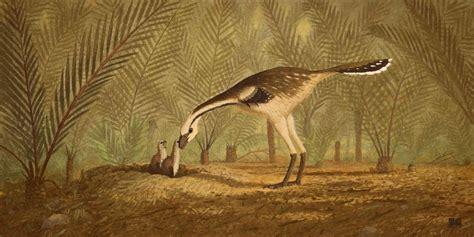 avimimus pictures facts  dinosaur