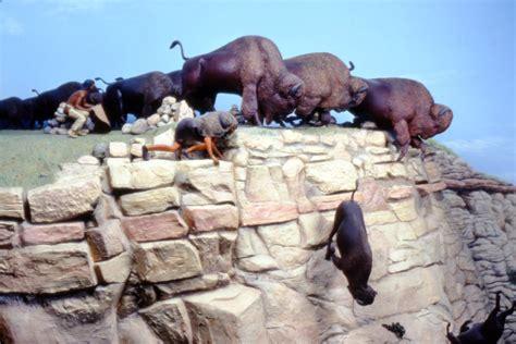 buffalo jumps   bison