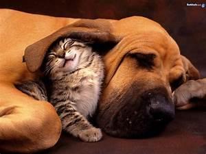 Cute Cat & Dog Sleep Together | Okay Wallpaper