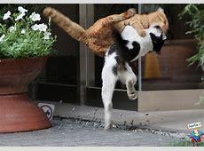 Scontro Tra Gatti Come Matrix • Foto di SuperEdoit
