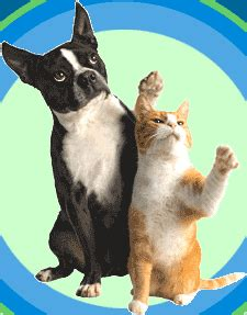 cat  dog gifs find share  giphy
