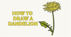 How to Draw a Dandelion - Really Easy Drawing Tutorial