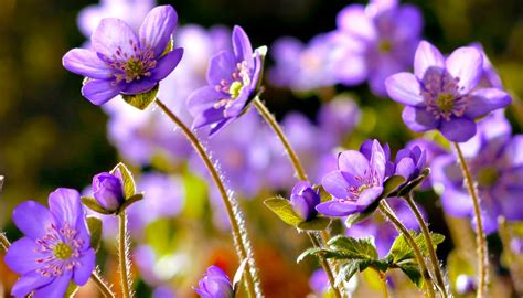 pics  flowers   px wallperiocom