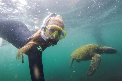 Visiting Tagus Cove in the Galápagos • The Blonde Abroad