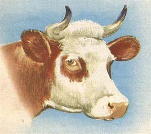 Tete De Vache Deco : dessin cole vache t te education environnement nature patrimoine ~ Melissatoandfro.com Idées de Décoration