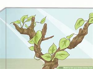 How to Set up a Green Anole Tank: 7 Steps (with Pictures)