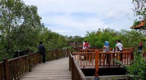 ekowisata mangrove wonorejo hutan bakau