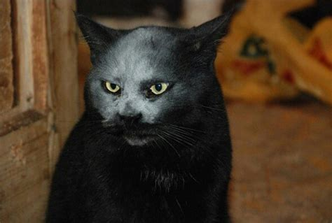 best kitchen knives this cat got covered in flour and now looks like a
