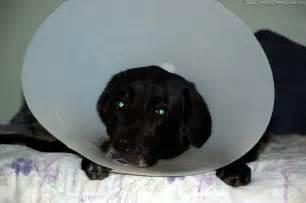 dog  collar    necessity