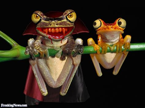 vampire frogs pictures freaking news
