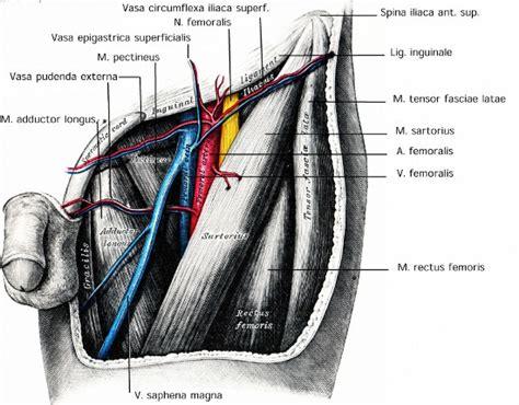 Bilder Aufhängen Leiste by Leiste Anatomie Der Inguinalregion Www Urologielehrbuch De