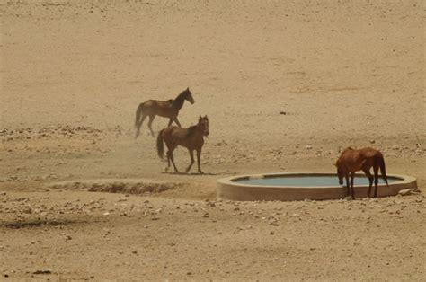 wild horses africa diamonds wind tall ship luederitz horse south namibia