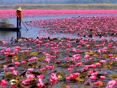 Screen Desktop Lotus Pink Lake Wallpapers Dang