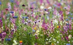 4 facons de se creer une prairie mon jardin ma maison With photo de jardin exotique 14 des flamants roses dans la deco joli place