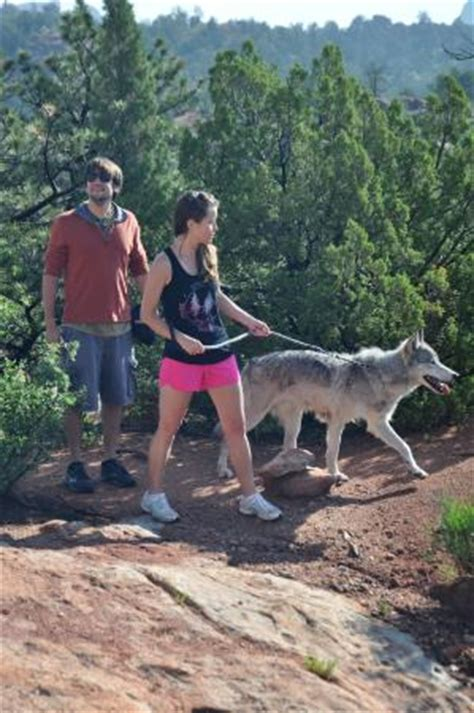 colorado wolf adventures woodland park hours address