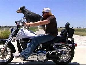 Motorcycle-riding dog gives owner's business a boost ...
