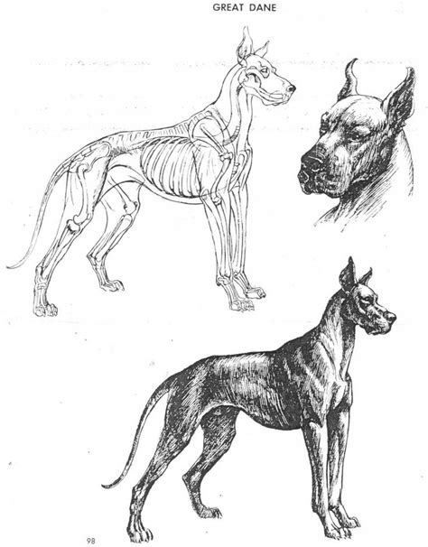 images  book  art  animal drawing
