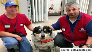 lowes hires man with a service dog With lowes hires service dog